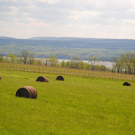 Hay rolls on the side of the lake  by Heather Donahue - Landscapes Mountains & Hills