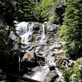 by Denver Pratt - Landscapes Forests