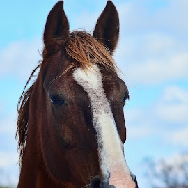 Don't fence me in by Kim Rogers-Krahel - Animals Horses ( face, winter, equine, horse )