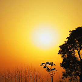 Nature by Shayaan Noori - Nature Up Close Trees & Bushes ( life, nature, serene, sunset, savenature, peace, trees, sunrise )