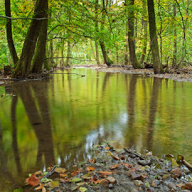 by Siniša Almaši - Landscapes Waterscapes ( water, tree, nature, color, forest, landscape, woods, river )