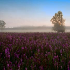 colored field in the morning by Nikola Hrzenjak - Landscapes Prairies, Meadows & Fields ( field, dawn, nature, blue, meadow, sun )