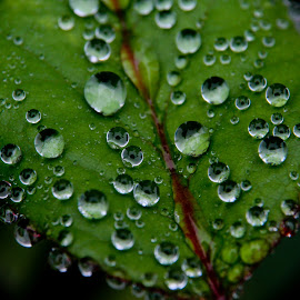 More Droplets by GPictoria -Gopu's Photography - Nature Up Close Leaves & Grasses ( macro, nature, landscape, flowers, leaves )