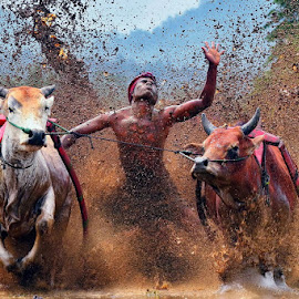 Race to win... by Hendra Nasri - Sports & Fitness Rodeo/Bull Riding