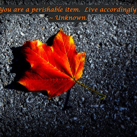 You Are A Perishable Item...Live Accordingly by Jennifer McWhirt - Typography Captioned Photos ( single leaf, photographybyjenmcwhirt.com, autumn, fall, captioned photos, leaf, typography )