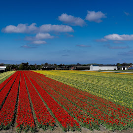 Floral Bliss by Ajay Prasad - Landscapes Prairies, Meadows & Fields