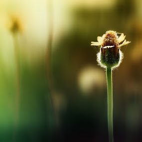 lonely... by Irfan Hikmawan - Flowers Flowers in the Wild ( macro, flower )