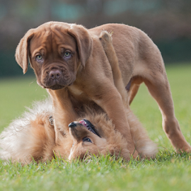 by Michael  M Sweeney - Animals - Dogs Puppies