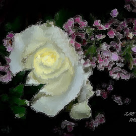 The Rose by Brenda Hooper - Digital Art Things ( rose, still life, flowers, digital )