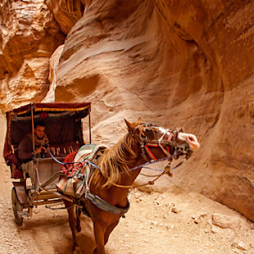 Way to Petra by Ivana Miletic - Transportation Other ( carriages, jordan, horse, canyon, petra )
