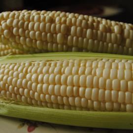 Fresh by Rhonda Yentzer-Rose - Food & Drink Fruits & Vegetables ( on cob, kernels, white, husk, vegetable, corn )