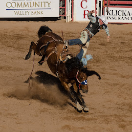 Bronc Riding by VJ Thomas - Sports & Fitness Rodeo/Bull Riding ( rodeo )