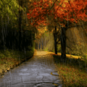 Rain In Autumn Live Wallpaper icon