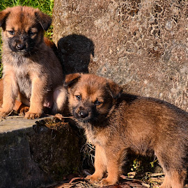 Friendship by Madhurima Das - Animals - Dogs Puppies