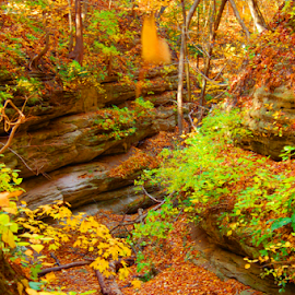 Creek bed by Jennifer Remillard - Landscapes Caves & Formations