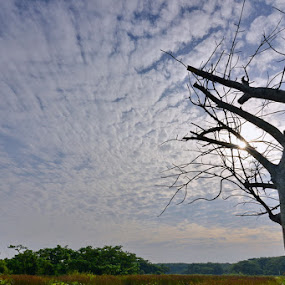 a tree by 思远 郭 - Landscapes Sunsets & Sunrises ( clouds, sky, tree, sunrise, sun )