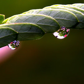by Wahyudi Barasila - Nature Up Close Leaves & Grasses