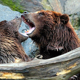 A Grizzly Affair by John Larson - Animals Other Mammals