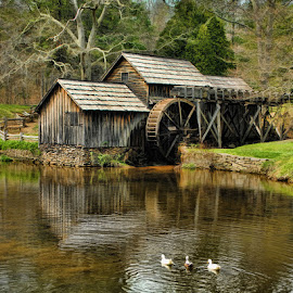 Get your ducks in a row! by Lowell Griffith - Buildings & Architecture Public & Historical ( grist mill, mabry mill, ducks, blue ridge parkway )