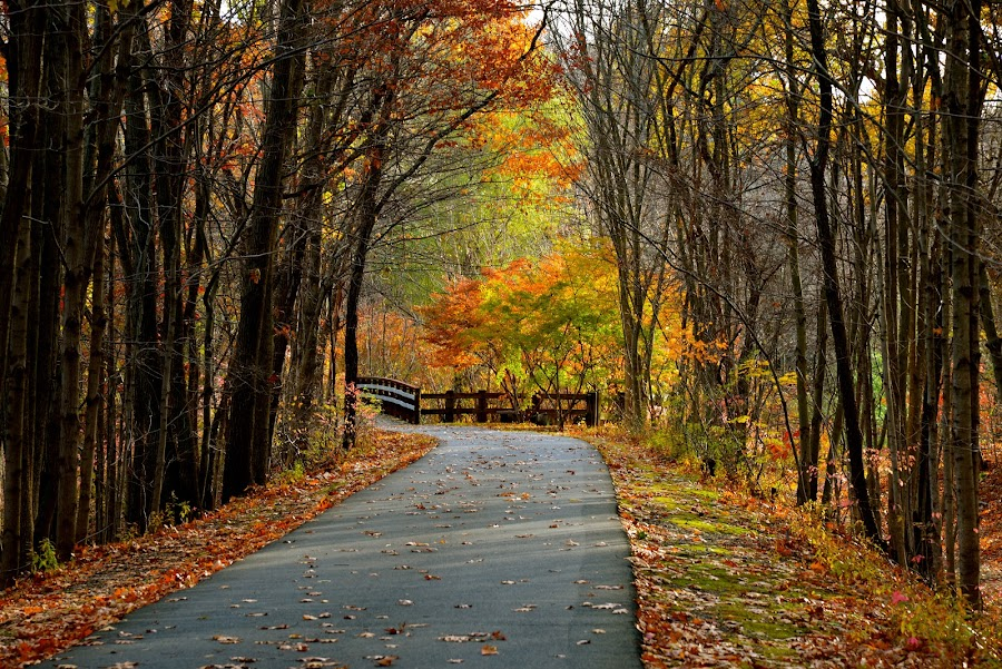 Autumn by Carl Testo - Landscapes Forests ( hcl, autumn, trail, forest )