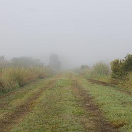 Fog Over Lake Woodruff by Mike Worlledge - Landscapes Prairies, Meadows & Fields