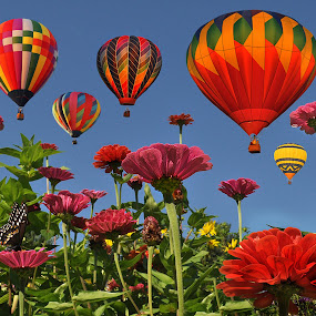 Festival of Color by Corinne Noon - Nature Up Close Flowers ( work, color, festival, flowers, balloons, my )