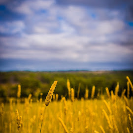 by Arj Herath - Landscapes Prairies, Meadows & Fields