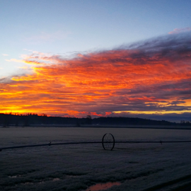 turf in the morning by Todd Reynolds - Landscapes Prairies, Meadows & Fields