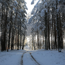 road to sunshine by Magdalena Strojnowska - Landscapes Forests ( winter, snow, snowy, forest, road )