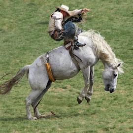 Bucking Bronc by Kathy Tellechea - Sports & Fitness Rodeo/Bull Riding