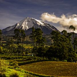 Volcano in the morning by Cristobal Garciaferro Rubio - Landscapes Mountains & Hills ( pines, field, citaltepetl, volcano, morning, snowy volcano )