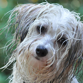 Water Fun by Deborah Wagner - Animals - Dogs Portraits ( water, playing, puppy, wet, dog )