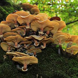 Fungi by Besnik Hamiti - Nature Up Close Mushrooms & Fungi ( fungi, autumn, kosovo, moss, forest, mushrooms )