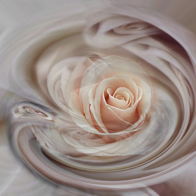 CAMEO by Carmen Velcic - Digital Art Abstract ( abstract, fractal, flowers, digital, light )