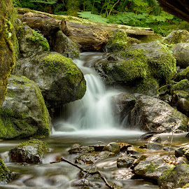 White Water by Jayme Spoolstra - Landscapes Forests ( olympic, stream, park, pnw, brook, green, national, moss, stone, pacific, forest, northwest, north, leaves, rainforest, washington, creek, fall, wa, rocks, rain, river )