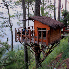 Homes on Tree by Benny Prayitno - Buildings & Architecture Homes (  )