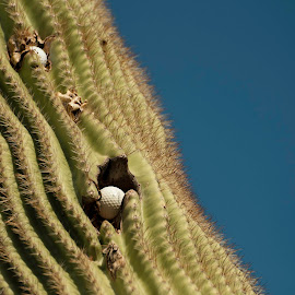 by Laura Johnston - Nature Up Close Other plants ( arizona,  )