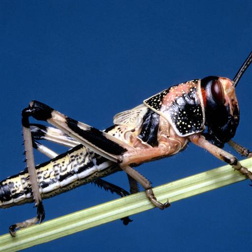 Grasshopper Jigsaw Puzzle LOGO-APP點子
