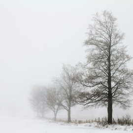by Kimberley Merrifield - Landscapes Prairies, Meadows & Fields ( fence, winter, fog, trees, misty, country,  )