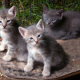 My Cat's babies by LoRe ARG Mirando Vidrieras Virtuales - Animals - Cats Kittens ( gato, cat, nature, kittens, garden,  )