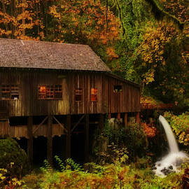 Cedar Creek Grist Mill; Woodland, WA by Christy  Hidalgo - Buildings & Architecture Other Exteriors ( water, washington state, nature, fall colors, autumn, waterfall, fall, grist mill, cedar creek grist mill, trees, fallen leaves )