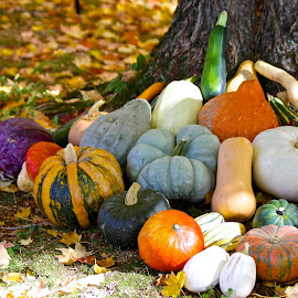 Squashes by Ernie Easter - Nature Up Close Gardens & Produce (  )