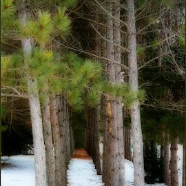 by Lori Kulik - Nature Up Close Trees & Bushes (  )