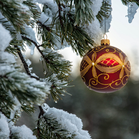Christmas in the wild by Irena Gedgaudiene - Public Holidays Christmas ( bauble, tree, snow, forest, pine, nikon d90,  )
