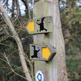 Witch Way by Colin Wood - Products & Objects Signs