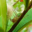 Spiders' nest