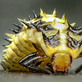 Beetle Larvae by Dave Lerio - Animals Insects & Spiders