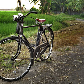 Standby Mode by Mohamad Priyanto - Transportation Bicycles ( parking, rice field, village, road, bicycle )