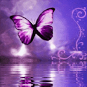 Purple Butterfly Reflected In icon