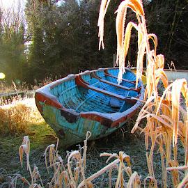 Going no where by Paula O'Sullivan - Transportation Boats ( grasses, blue, sunlight, boat, frosty )